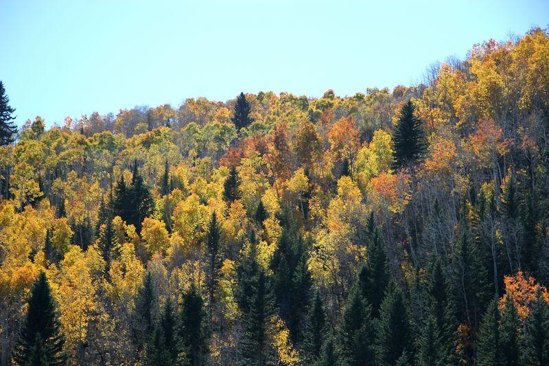 Colored Hill