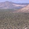 Cardonal, Kakteenwald aus bis zu 20 Meter hohen Säulenkakteen, Cardon, Pachycereus pringlei, Sierra de San Borja, Baja California, Niederkalifornien, Mexiko, Mexico