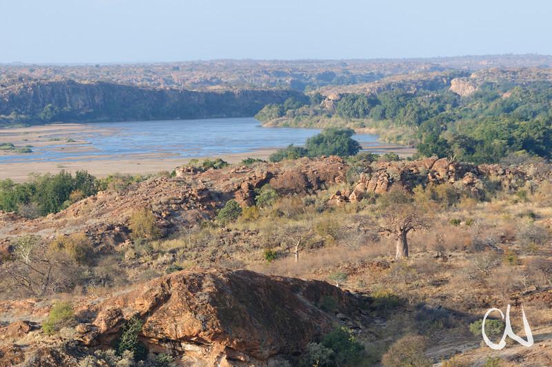 Limpopo River and Baobab trees (Adansonia digitata), Mapungubwe National Park, Limpopo, Grenze zu Simbabwe, South Africa, Südafrika
