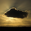 Sonnenuntergang über dem Kakteenwald, Cardonal, Catavinha Boulderfields, Baja California, Niederkalifornien, Mexiko, Mexico