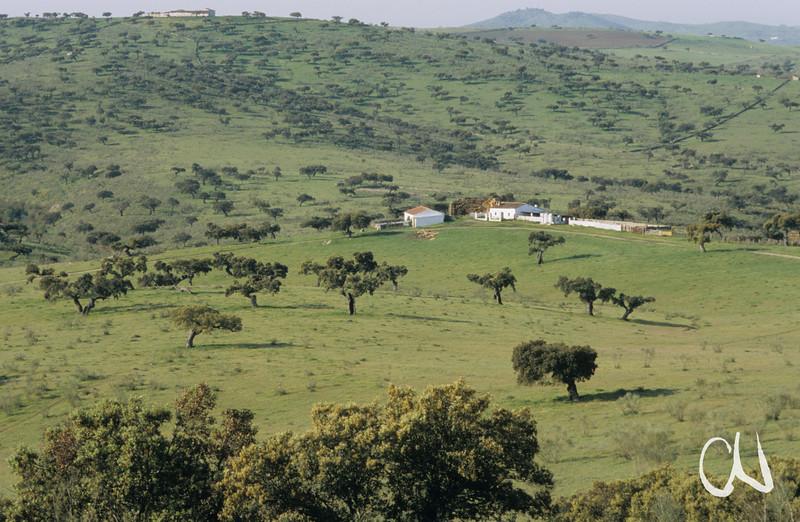 Finca in Dehesa-Landschaft, Eichen, Monfrague, Extremadura, Spanien