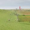 sheep and lighthouse, island of Texel, The Netherlands, Leuchtturm und Deichlandschaft mit Schafen auf der Insel Texel, Niederlande