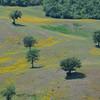 Weide, Wiese, Klee, Landschaft in der südlichen Toskana, bei Roccalbegna, landscape in Roccalbegna, southern Tuscany, Italy