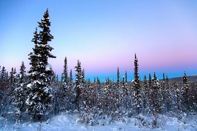 Alpenglow Spruce
