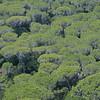 Pinienwald (Pinus pinea) im Naturpark Maremma, Parco Naturale della Maremma, bei Alberese, Provinz Grosseto, Toskana, Italien, Europa, Tuscany, Italy