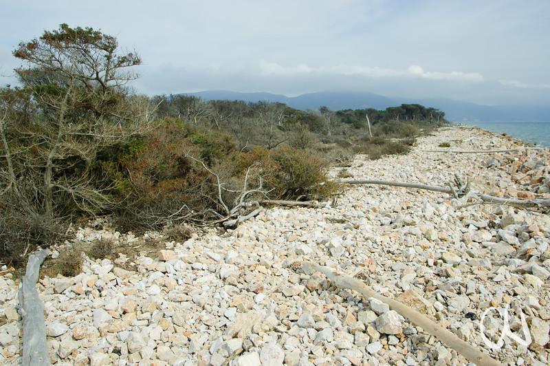 steiniger Strand am MArina di Alberese, Naturpark Maremma, Parco Naturale della Maremma, bei Alberese, Provinz Grosseto, Toskana, Italien, Europa, Tuscany, Italy, Toskana