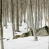 Buchenwald, Schnee, Monte Amiata, Maremma, Toskana, Italien, Tuscany, Italy