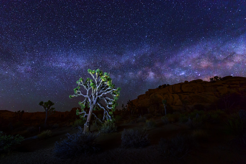Milky Way over Joshua Trees National Park