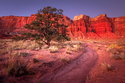 Soft, glowing light reflects off the red rock cliffs at twlight. Capitol Reef National Park.
