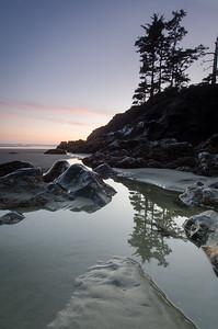 Tree Reflection at Sunset