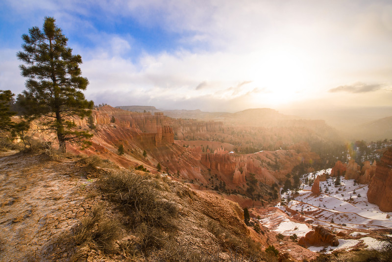 Pine with a View<br /> <br /> Taken at sunrise in Bryce Canyon National Park shortly after a snow storm finished blowing out.