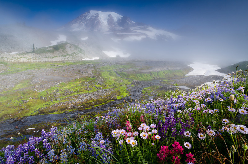 Mt. Rainier with summer wild flowers