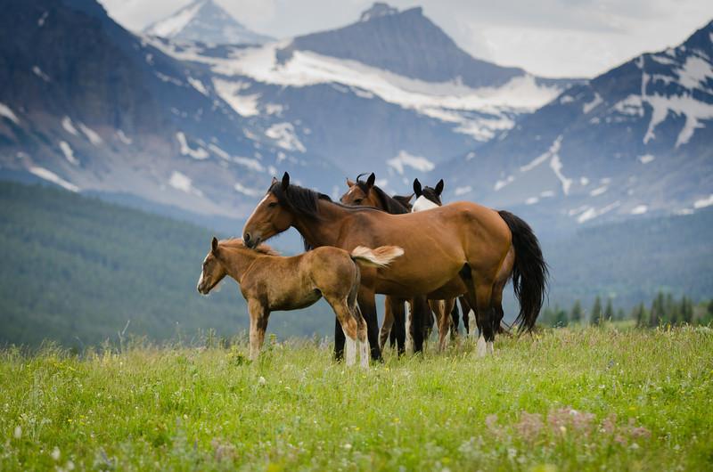 Among the Mountains<br /> Glacier National Park