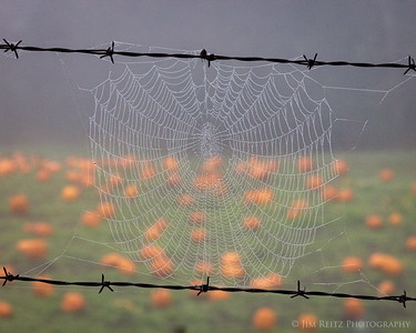 Spider web and pumpkins - must be fall!