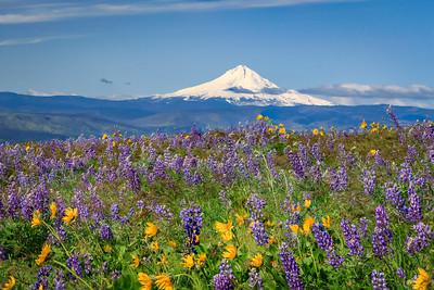 Mount Hood and wildflowers, Columbia Hills State Park, Washington