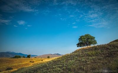 Rolling hills and tree. Near Winthrop, Washington