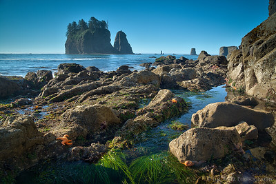 Starfish and tidepools - Second Beach, Olympic National Park.