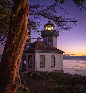 Madrone and Lighthouse