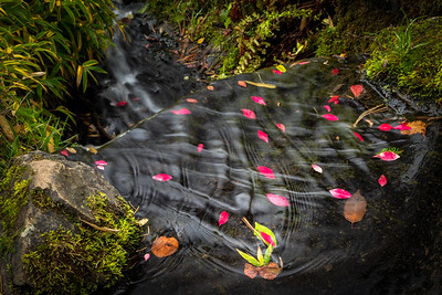 Interference patterns - Kubota Garden, Seattle