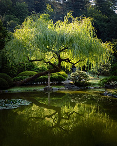A calm reflection this morning at the Seattle Japanese Garden