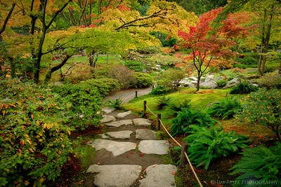 Autumn color at the Seattle Japanese Garden