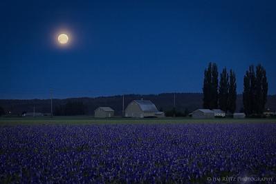 Blue/Purple/Moon