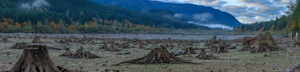 Panoramic image of Rattlesnake Lake, Washington. Extremely low water levels in fall 2015 expose hundreds of tree stumps where the lake used to be.