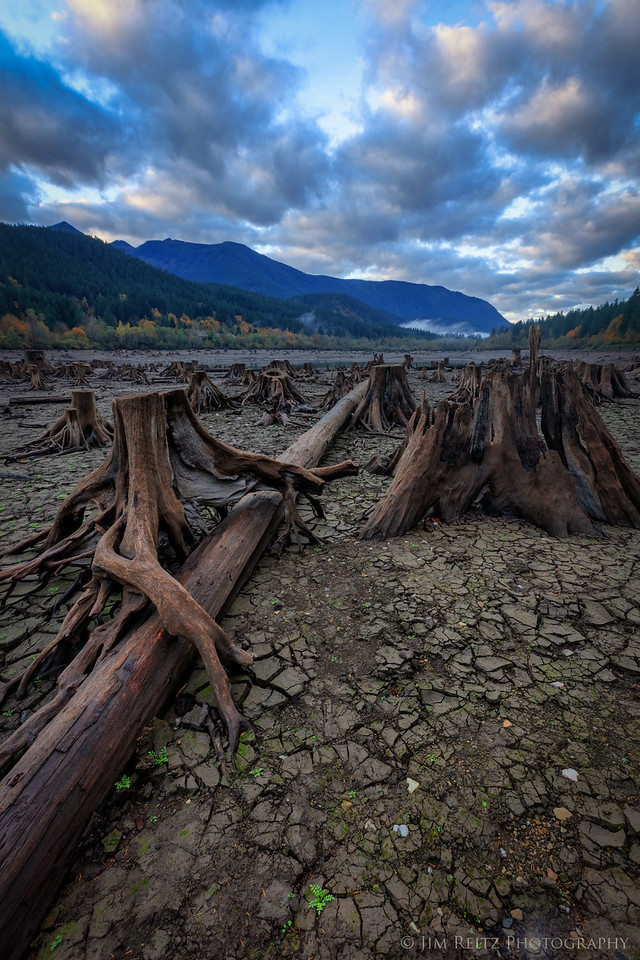 Tree stumps on exposed lake bed - Rattlesnake Lake, Washington