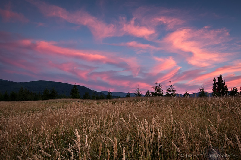Fescue Sunset