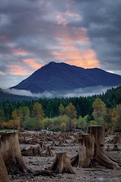 Sunrise over exposed tree stumps - Rattlesnake Lake, Washington