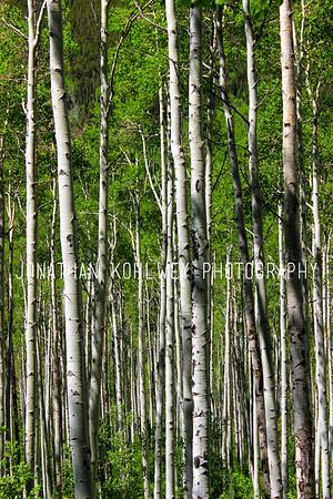 Aspen Patch, Aspen, Colorado