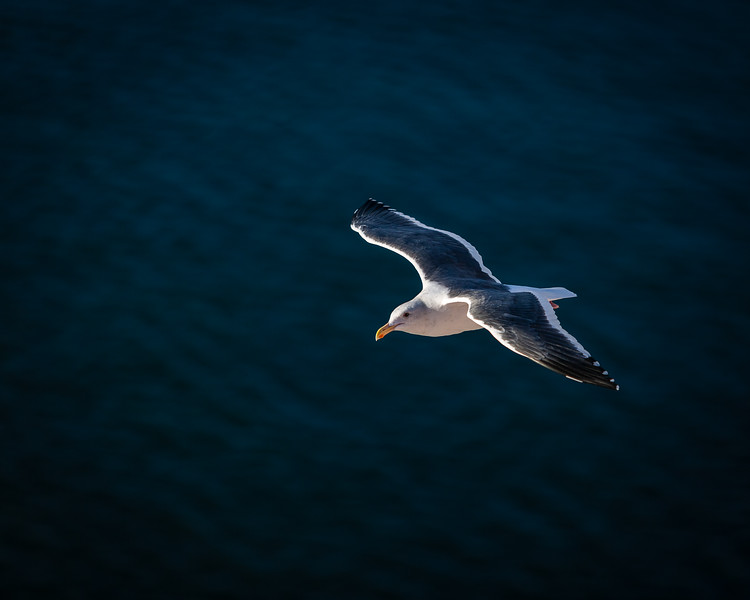 Alone In Flight