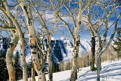 Aspen bark on Coney's Ridge