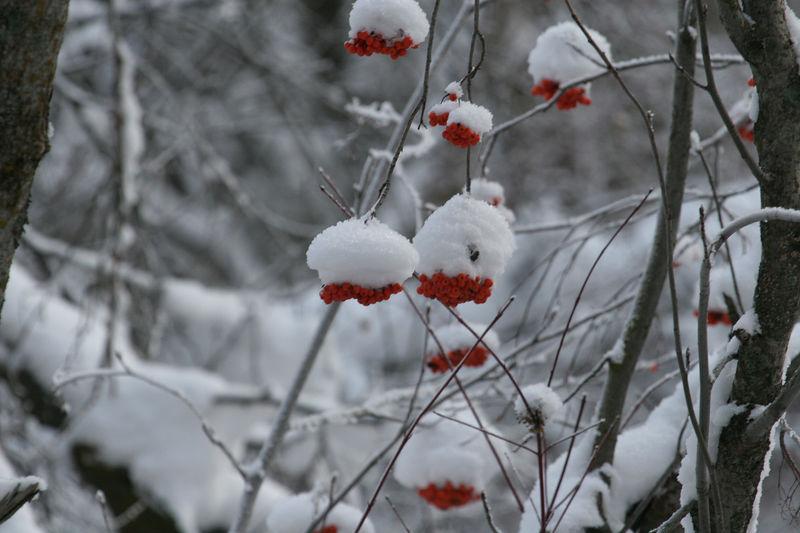 5785 Christmas Ornaments