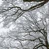 Wintereichen