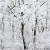 winterlicher Wald mit Raureif, Mettenberg, Baden-Württemberg, Deutschland