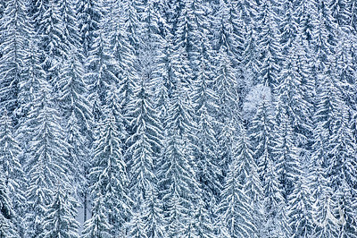 Winterlandschaft im Schwarzwald, schneebedeckte Bäume, Fichten, Höllental bei Hinterzarten, Deutschland, winter landscape in the Black Forest, snow-covered spruce trees, Germany
