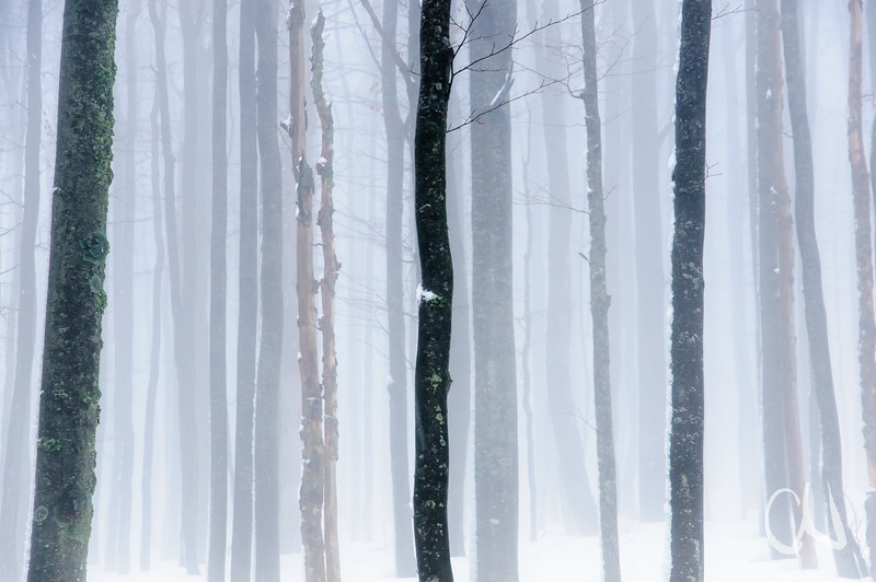 Nebel, Wald, Baumstämme, Lusen, Nationalpark Bayerischer Wald, Deutschland, tree trunks in fog, Bavarian Forest National Park, Germany