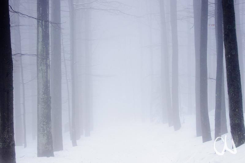 Der Weg ins Nichts, Wald, Nirvana, Lusen, Nebel, Baumstämme, Nationalpark Bayerischer Wald, Deutschland, Road to Nowhere, nirvana, Bavarian Forest National Park, Germany