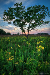 Flowers at sunset - Fond du Lac, Wisconsin