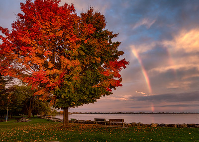 Rainbow tree, rainbow sky.