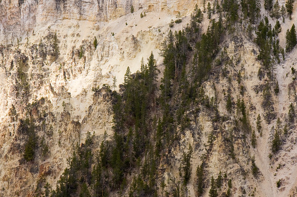 Valley at Lower Falls - Yellowstone National Park, WY