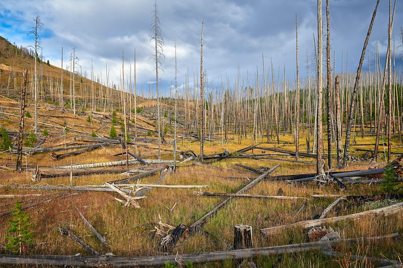 Life After Forest Fires