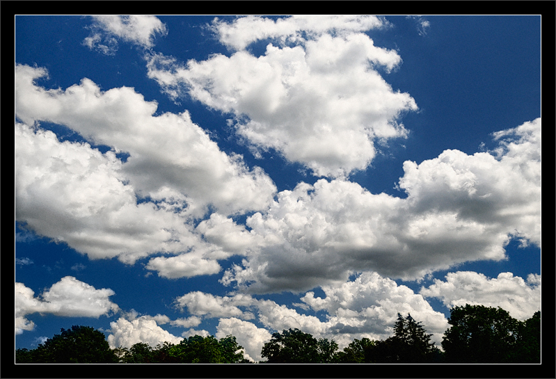 Summer Clouds Over Trees  A beautiful summer day in the land of arbor  (These are not rain clouds!)  Ann Arbor, Michigan  10-JUN-2008
