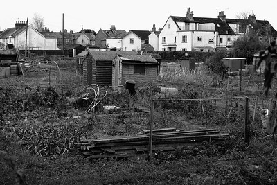 Newbury - Russell Road Allotments from the Canal Towpath - Nikon 1 V1