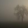 Einsam im Nebel