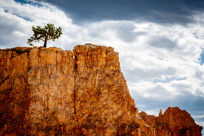 Tree on Red Rock at Bryce Canyon, Utah