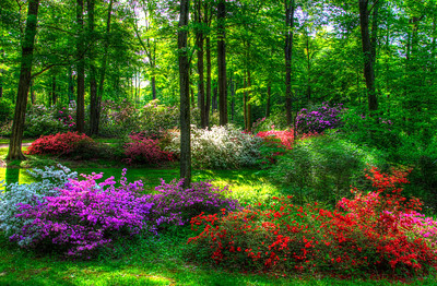"""Garden of Color""  illustrates the splendor of gardens at their peak. This image was captured at The Holden Arboretum in Kirtland, Ohio"