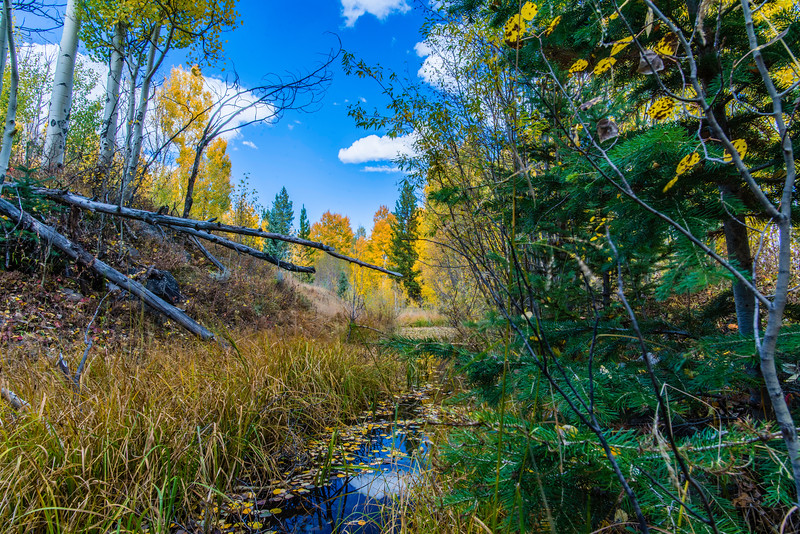 Meadow Creek in Fall