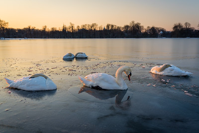 A Frozen Morning in Kensington Gardens, London